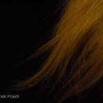 Agnes Posch